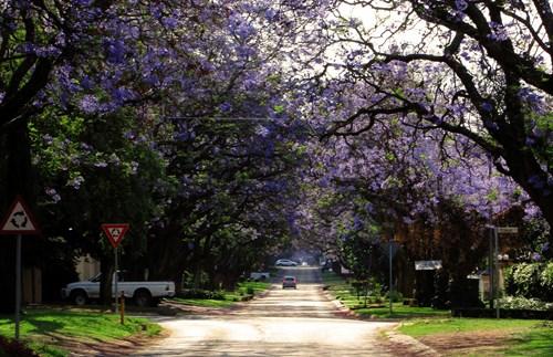 Brooks Street In Full Bloom
